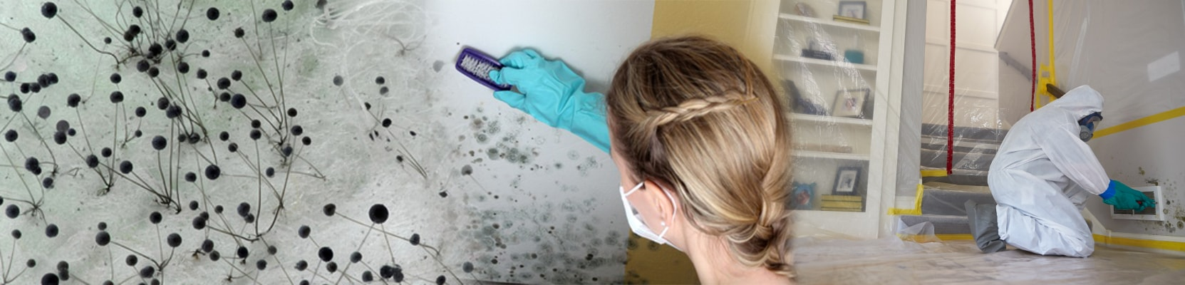 mold-remediation-in-staten-island-and-brooklyn-ny-servicemaster-restoration-by-complete